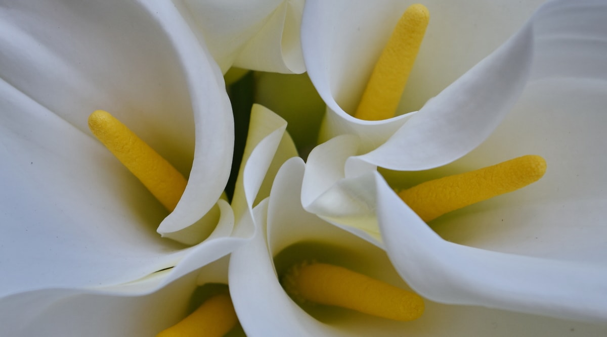 tropical, white flower, white, nature, flower, beautiful, bright, color