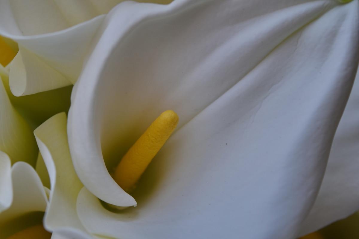 lupienok, biela, biely kvet, kvet, príroda, Farba, elegantné, flóra
