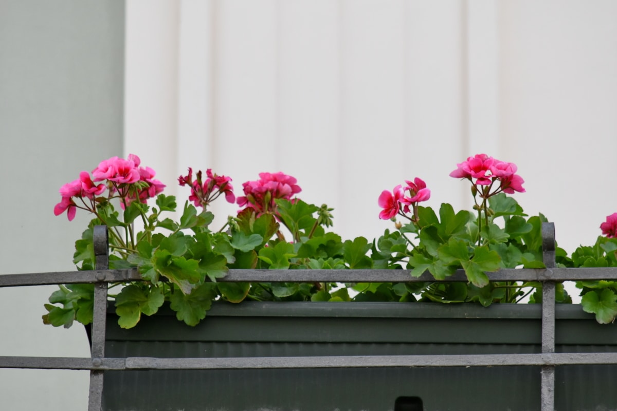 arrangement, balcony, flowerpot, plant, garden, flora, flower, flowers, decoration, nature
