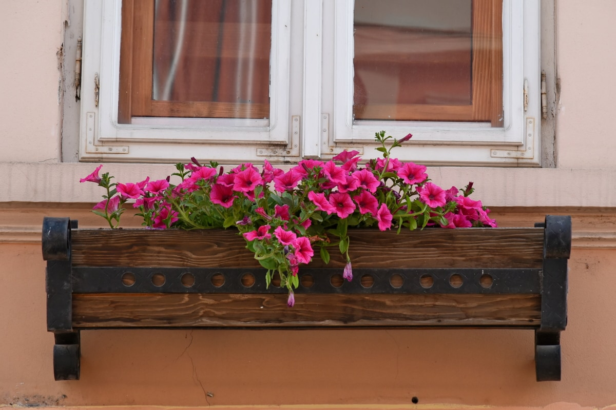 flowerpot, wood, sill, wooden, house, decoration, flower, window, architecture, old