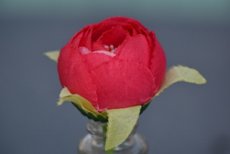 object, plastic, still life, vase, petal, rose, bud, flower, nature, gift