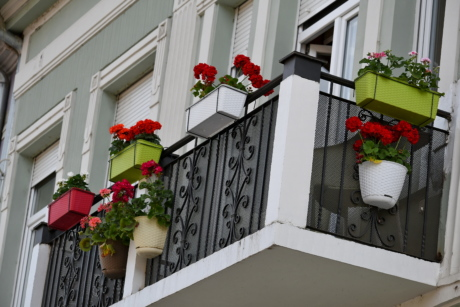 balcony, flowerpot, urban area, windows, house, architecture, window, building, home, flower