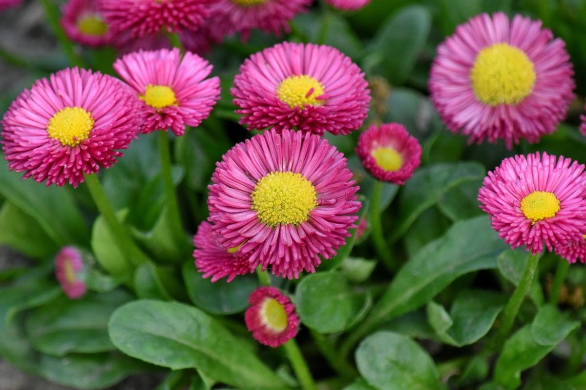 άγρια φύση, λουλούδι, βότανο, χλωρίδα, φυτό, φύση, Κήπος, πέταλο, το καλοκαίρι, ανθισμένα