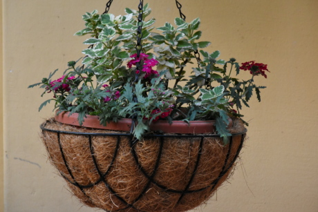 decoration, flowerpot, still life, container, flora, flower, leaf, nature, garden, interior design