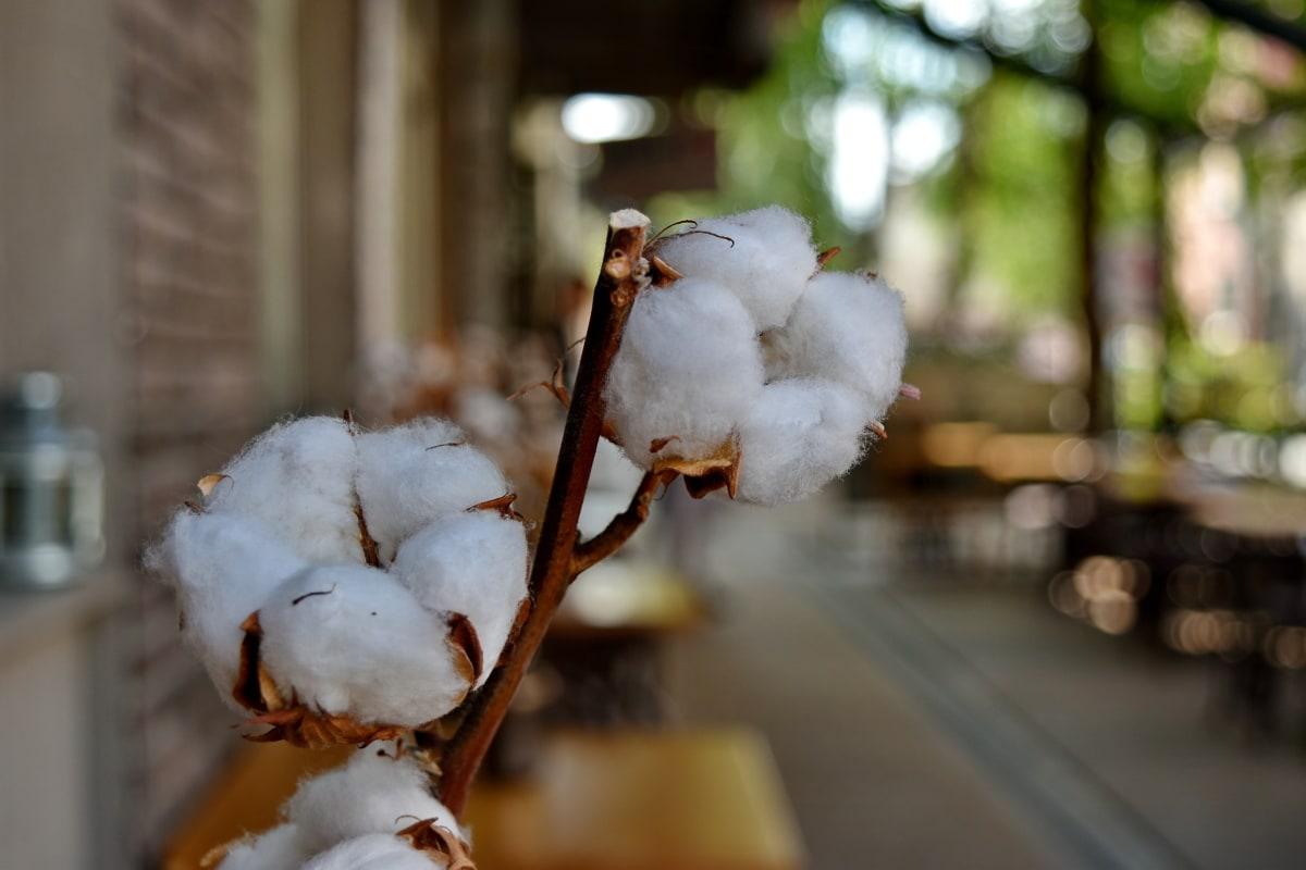 bomull, dekorasjon, Blur, utendørs, natur, tre, blad, fortsatt liv, dagslys