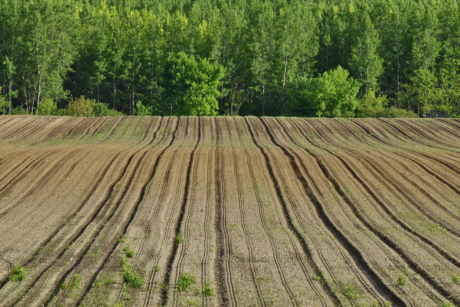 agricultural, field, hillside, soil, wood, landscape, nature, tree, agriculture, rural