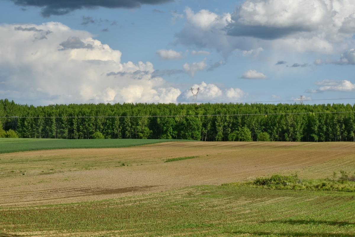 Sommer, landskapet, eng, landbruk, feltet, gresset, treet, natur, utendørs, landskapet