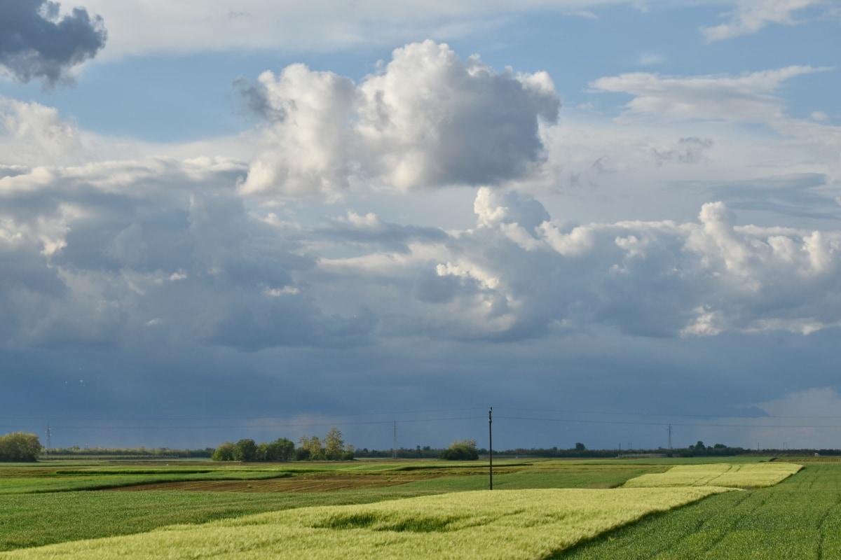 landbruk, Wheatfield, skyen, feltet, landskapet, natur, gresset, atmosfære, eng, landskapet