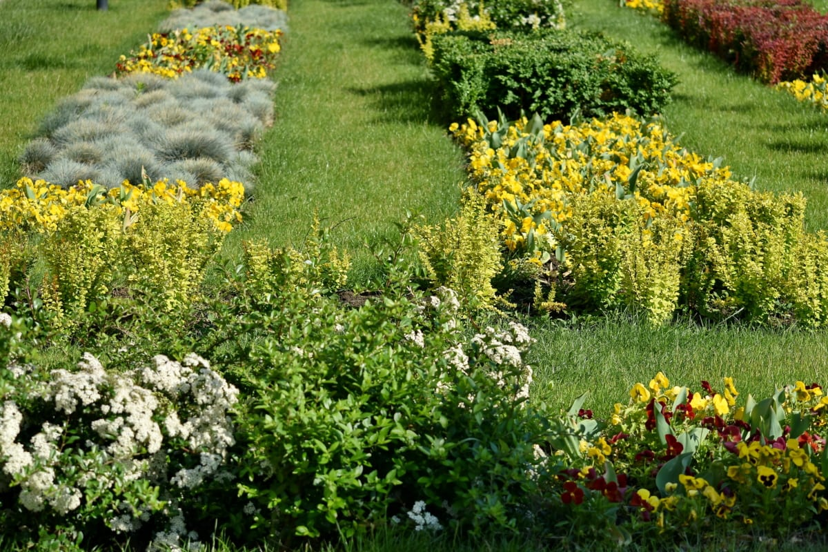 сад, Природа, трава, цветок, Флора, завод, Лето, цветение, на открытом воздухе, трава