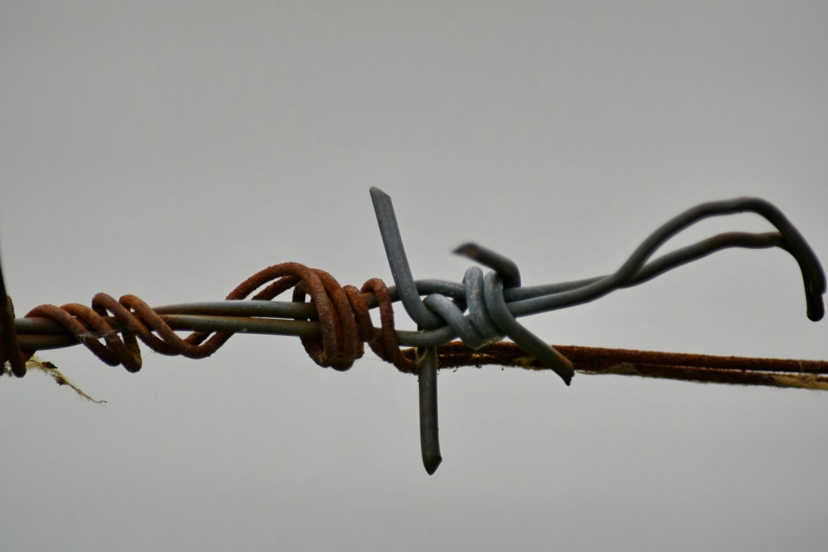 barbed wire, device, security, fence, iron, safety, outdoors, steel, daylight, nature