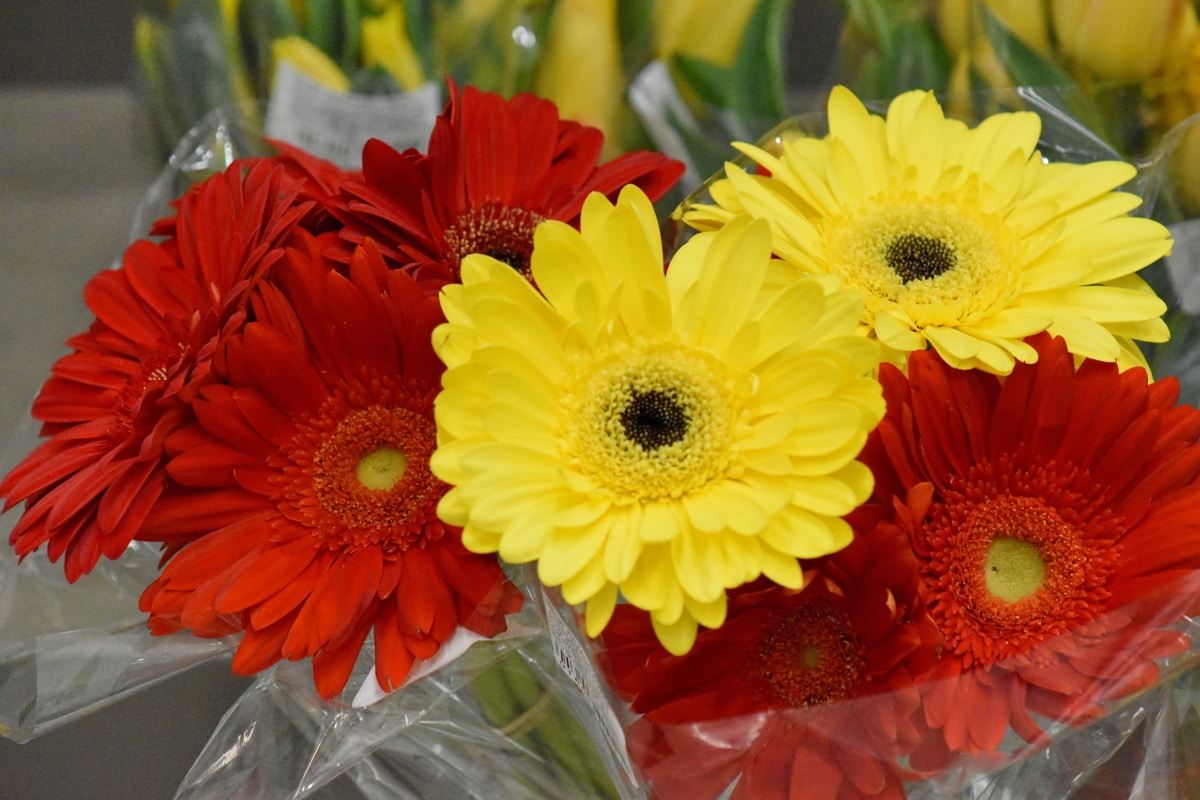 blomst, flora, buket, gul, järjestely, kronblad, lyse, natur, farve, sommer
