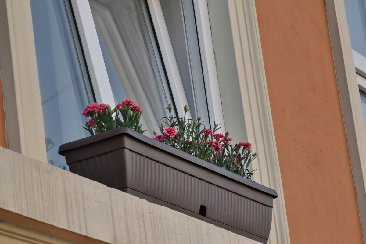 carnation, flowerpot, urban area, windows, house, window, family, architecture, home, building