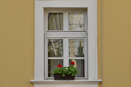 facade, flowerpot, window, sill, house, wood, architecture, home, wall, door
