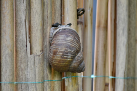 light brown, spiral, invertebrate, snail, animal, wood, wooden, nature, old, upclose