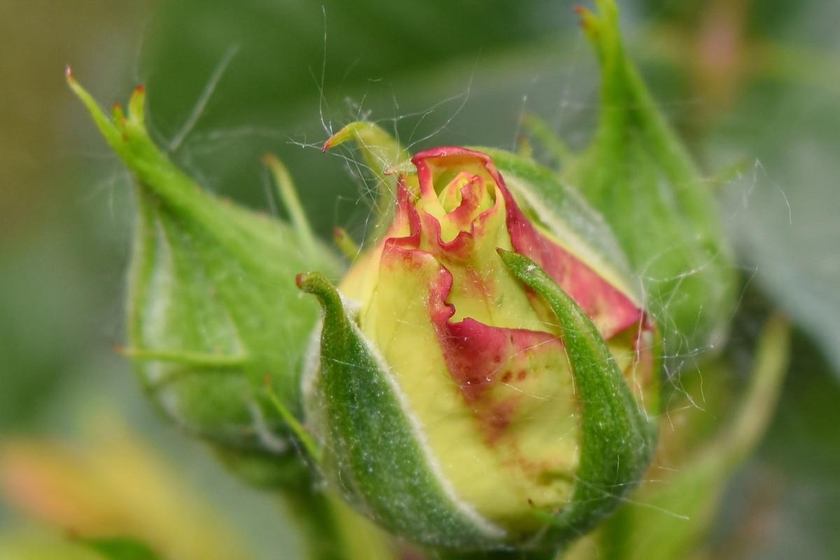 amarelado, agricultura, lindas flores, broto, Cor, luz do dia, detail, detalhes, Ecologia, meio ambiente