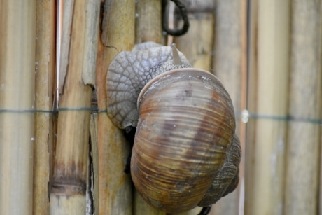 head, slim, snail, shell, invertebrate, animal, wood, spiral, old, nature