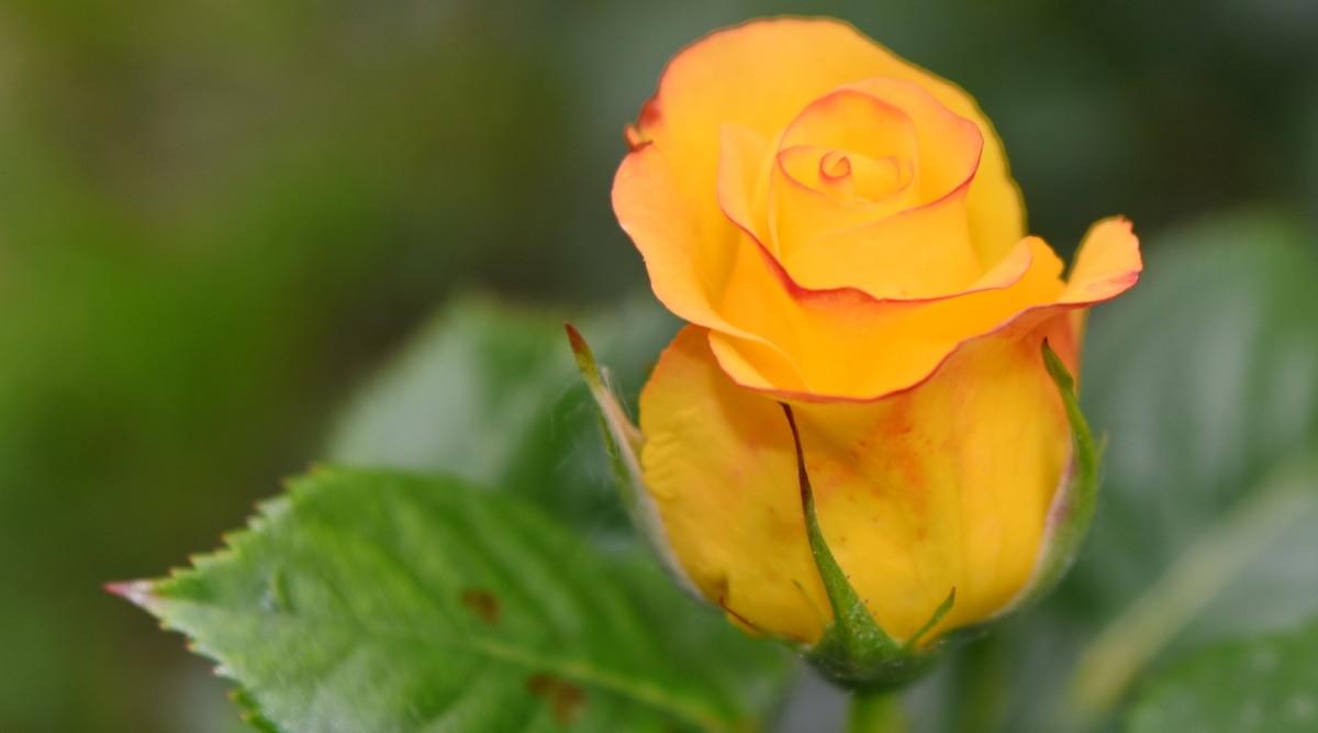 Gambar Gratis Cantik Bunga Bunga Indah Mekar Mekar Mekar