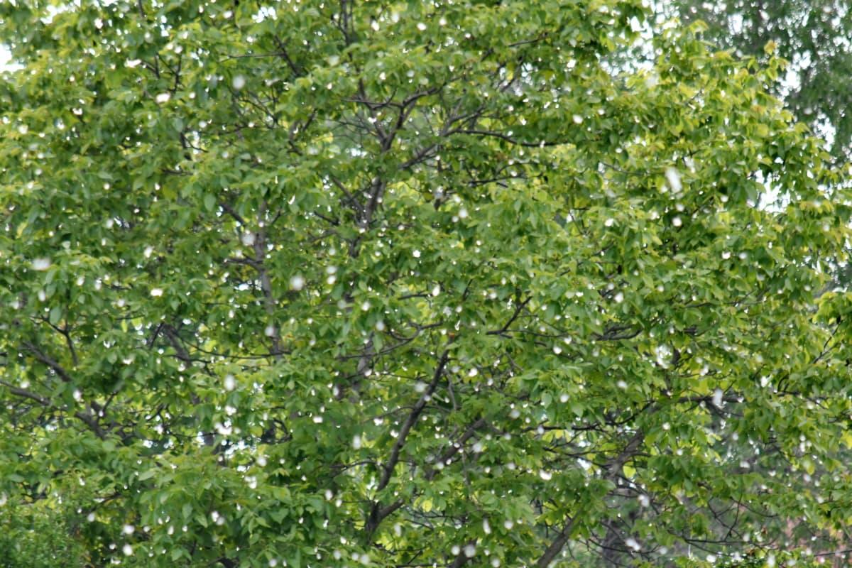 Gió, chi nhánh, cây, Thiên nhiên, rừng, lá, thực vật, môi trường, thực vật, cảnh quan