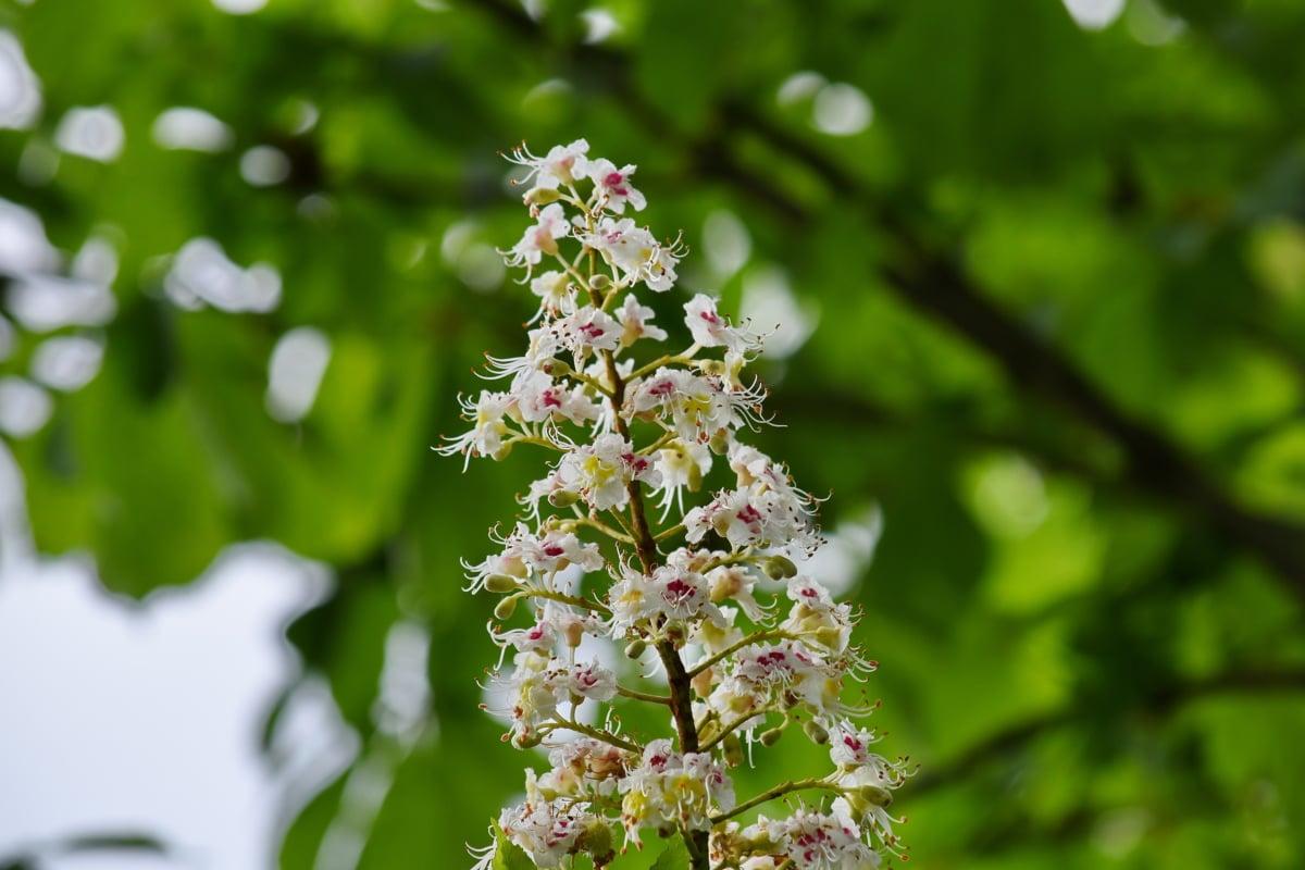 natura, albero, pianta, erba, foglia, Flora, fiore, Blooming, Giardino, estate