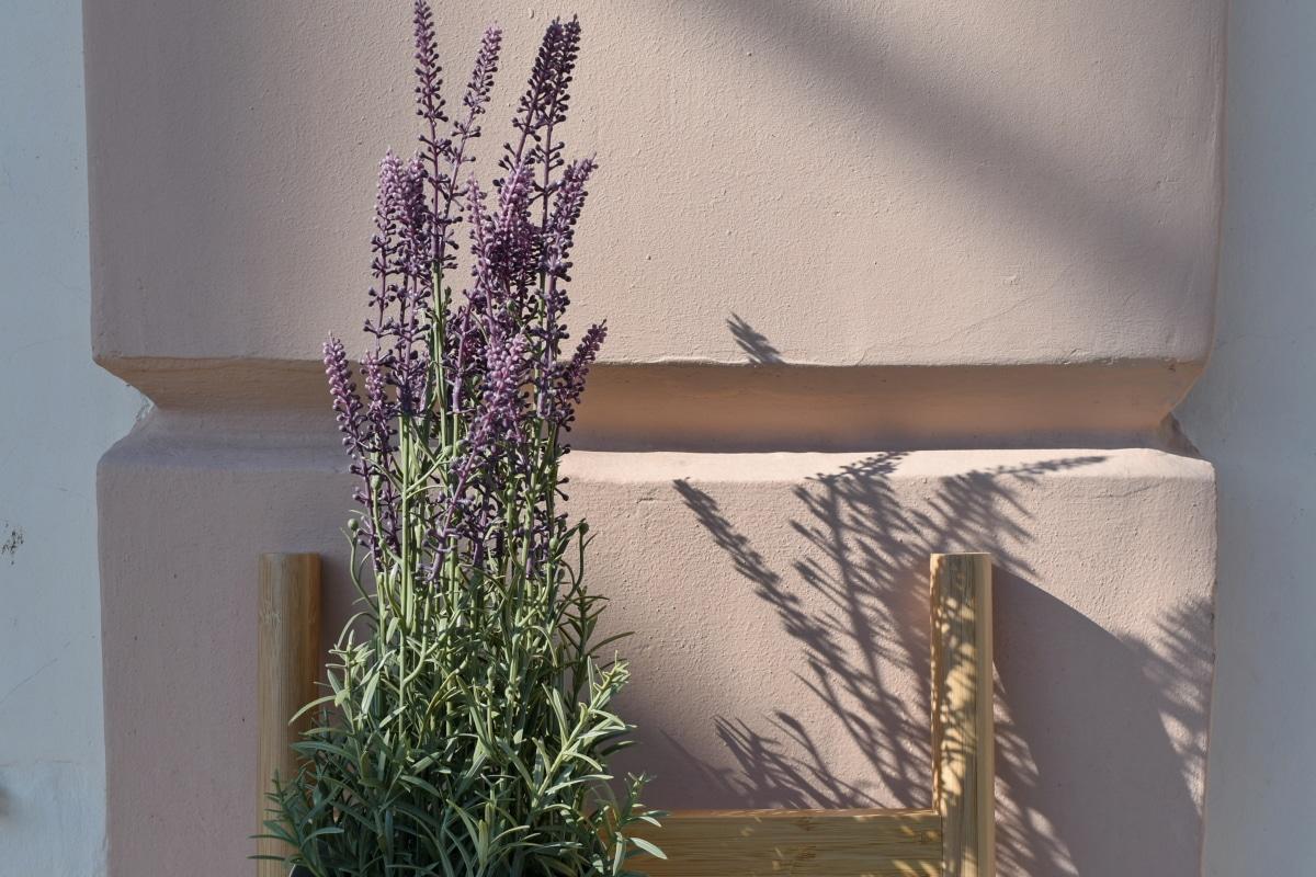 decoration, flowerpot, ladder, flower, interior design, still life, nature, flora, house, leaf