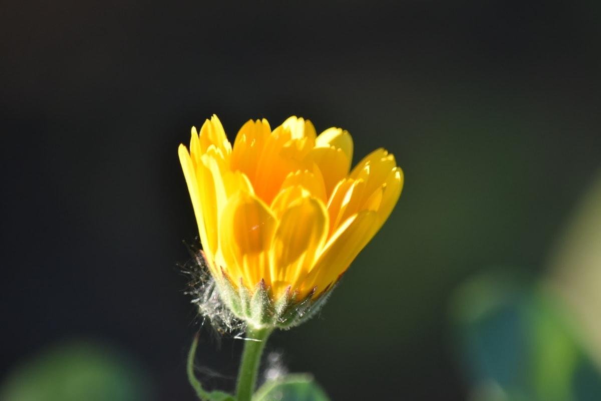 nature, flower, flora, spring, blossom, herb, plant, bloom, petal, leaf