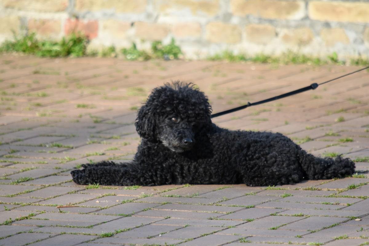 Widok z boku, psi, pies, na zewnątrz, zwierzę, portret, światło dzienne, trawa, ładny, Natura