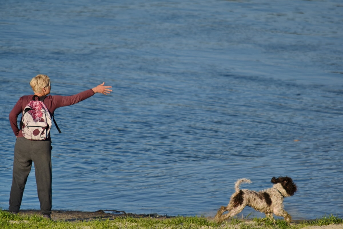 dog, hunting dog, trainer, training program, woman, shore, sea, water, ocean, outdoors