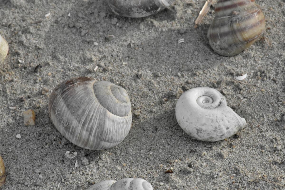 vỏ sò, vỏ, bờ biển, Thiên nhiên, Bãi biển, Cát, sống ở biển, mùa hè, biển, thủy
