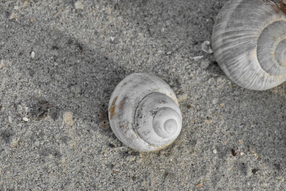 ranta, hiekka, eläimiin, mollusk, selkärangattomat, meren rannalla, kuori, Luonto, kotilo, Shore