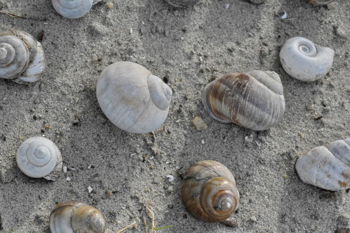 mušle, slimák, morský breh, pláž, kôrovce, ulita, špirála, škrupina, piesok, príroda