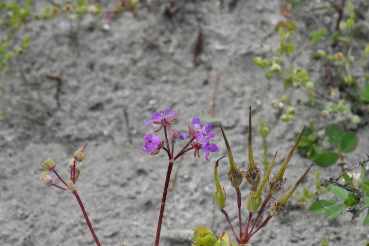 làm vườn, thảo mộc, Hoa, Thiên nhiên, mùa hè, thực vật, ngoài trời, lá, Sân vườn, nở hoa