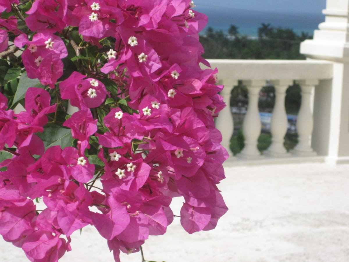 balkong, gjerdet, blomsterhage, Resort område, blomstre, anlegget, hage, kronblad, blomst, blomster
