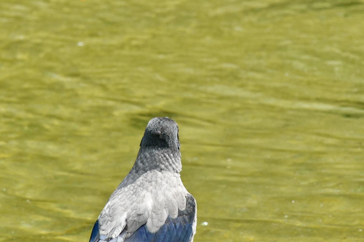 นก, ขนนก, ธรรมชาติ, ป่า, น้ำ, สัตว์ป่า, สัตว์, สวยงาม, จะงอยปาก, ทะเลสาบ