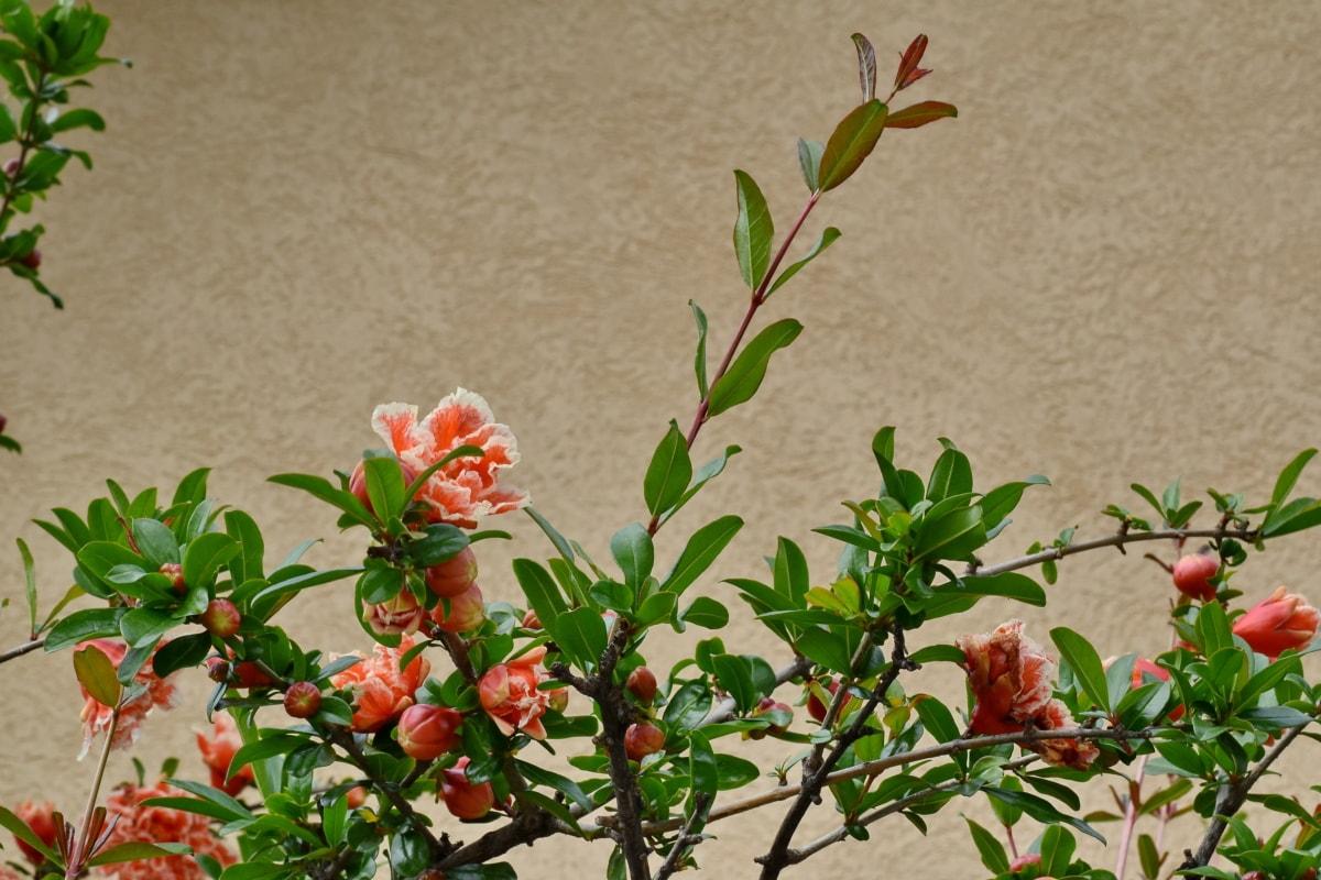 pobočka, kvetinová záhrada, Ker, krídlo, príroda, strom, kvet, flóra, letné, Záhrada