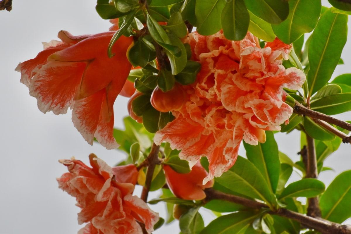 flora, semak, pohon, tanaman, bunga, daun, alam, musim panas, cerah, cabang