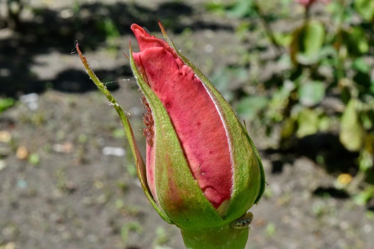 tırtıl, böcek, çiçek, yaprak, flora, doğa, açık havada, kapatmak, Bahçe, Yaz