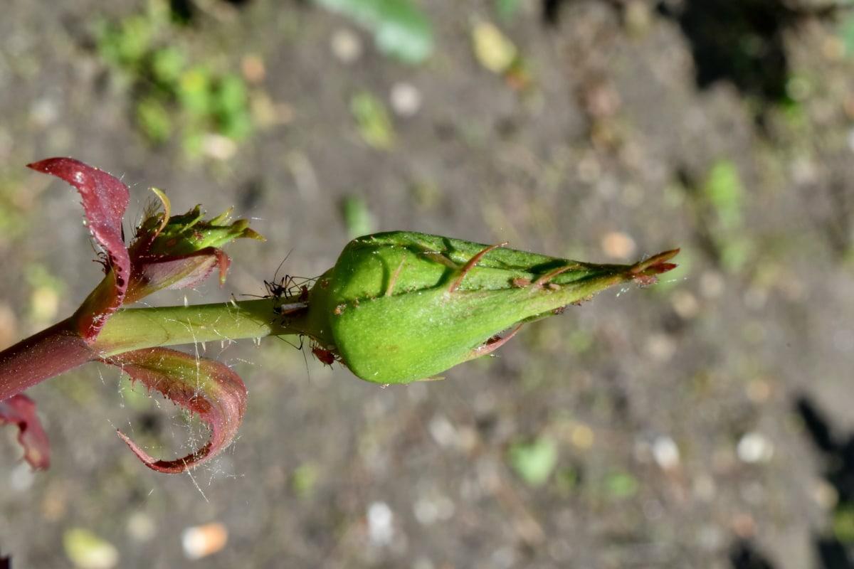 kukac, pauk, pupoljak, priroda, list, cvijet, pogled iz blizine, na otvorenom, flore, biljni i životinjski svijet