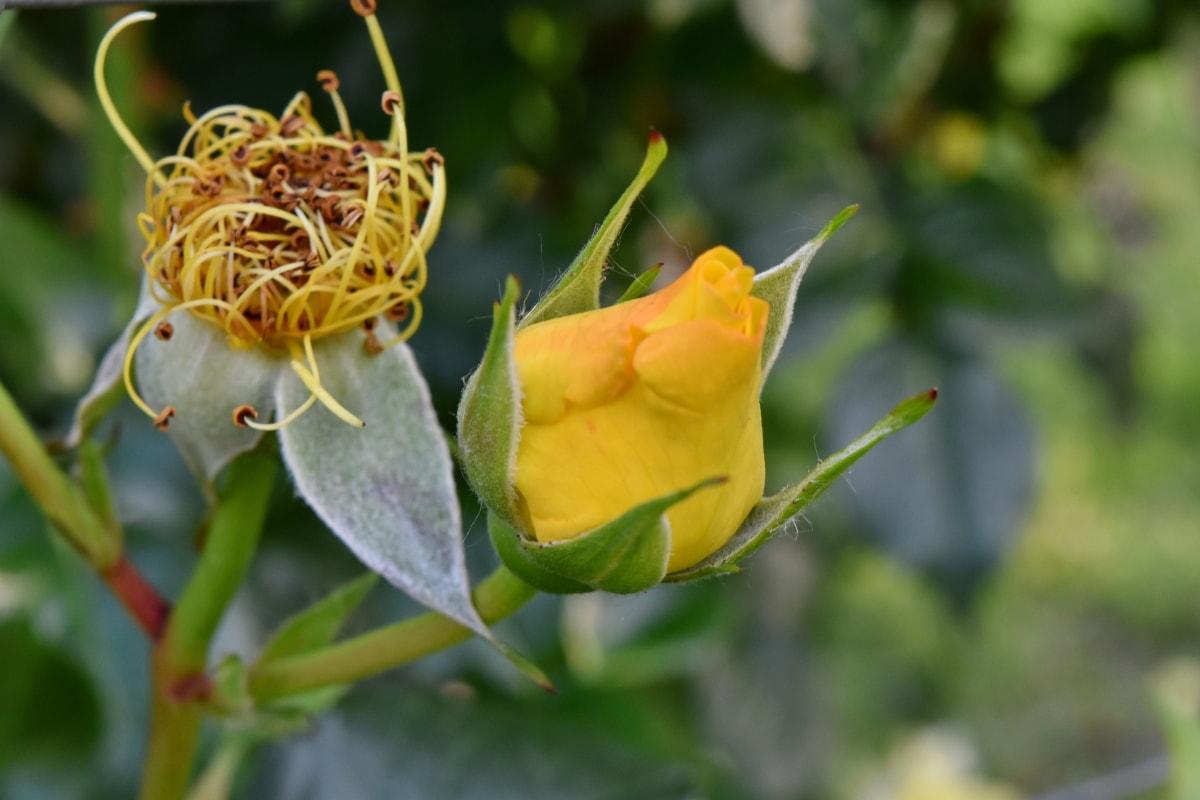 beautiful flowers, yellow, nature, bud, plant, flora, leaf, flower, garden, summer