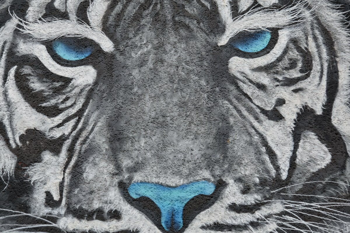 creativity, graffiti, wall, face, art, animal, head, design, artistic, illustration