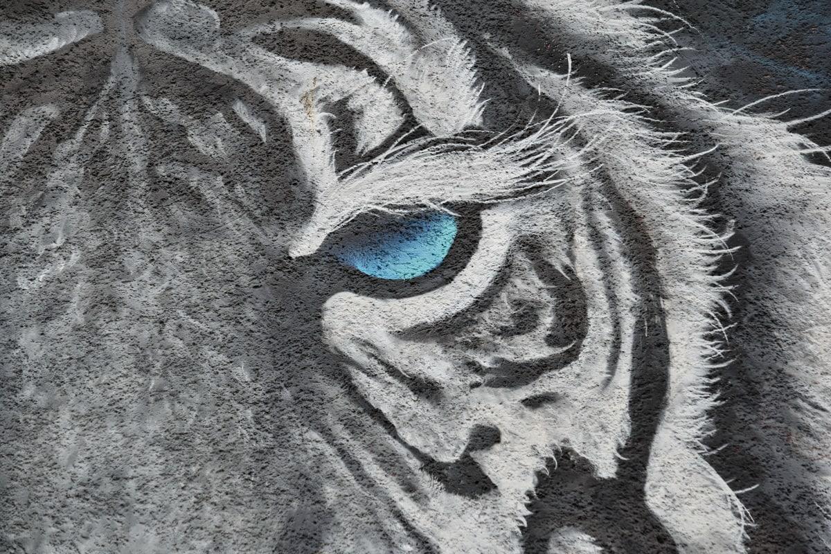 เสือ, สัตว์ป่า, กราฟฟิตี, ศิลปะ, ศิลปะ, ใบหน้า, บทคัดย่อ, ผนัง, เนื้อ, การออกแบบ