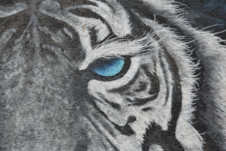 tiger, wildlife, graffiti, art, artistic, face, abstract, wall, texture, design