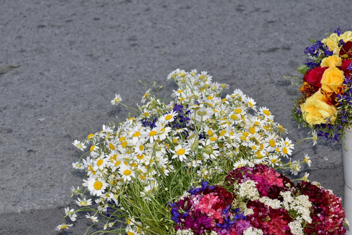 bouquet, bucket, chamomile, herb, nature, flower, daisy, flowers, summer, plant