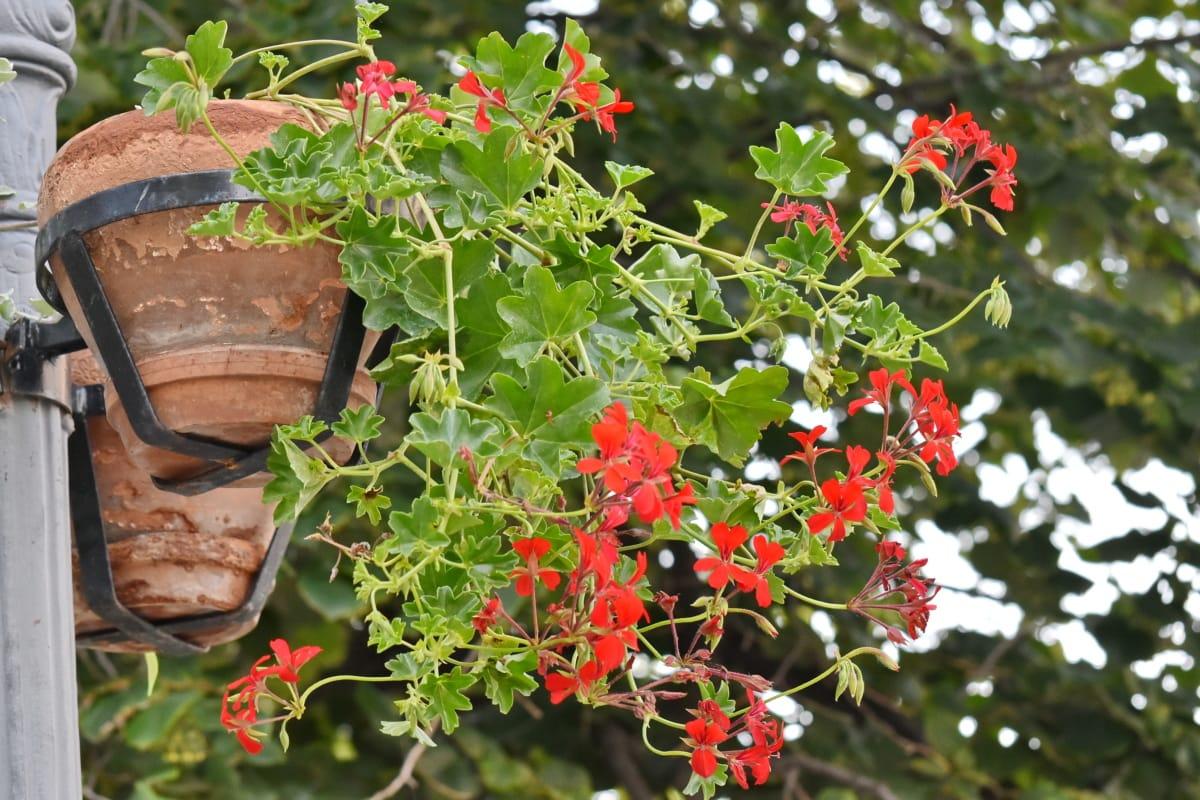 Imagine Gratuită Ghiveci De Flori Strada Copac Arbust