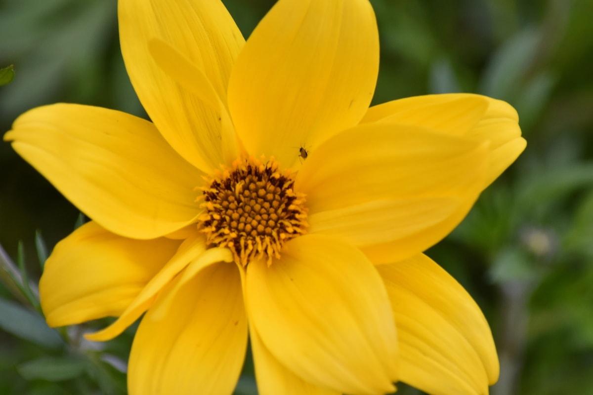 insect, pistil, yellow, plant, flower, summer, nature, blossom, sunflower, petal