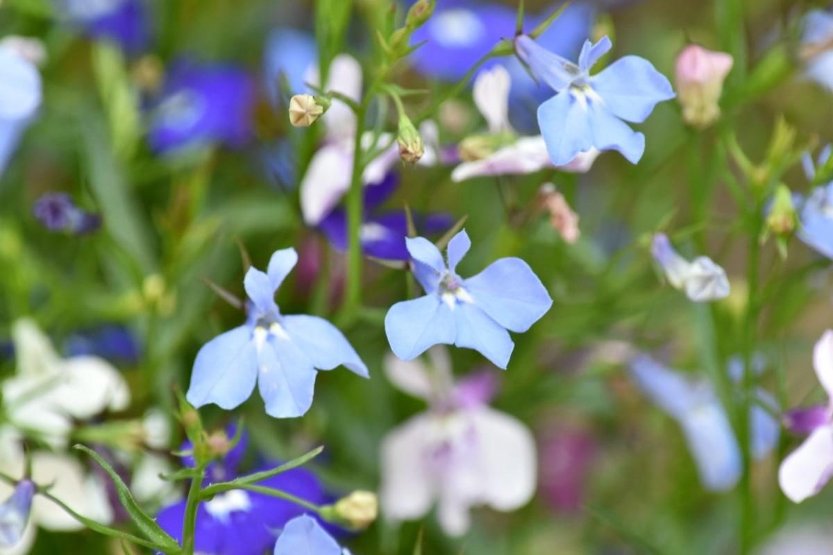 фіолетовий, завод, літо, природа, флора, квіти, рослина, квітка, лист, на відкритому повітрі