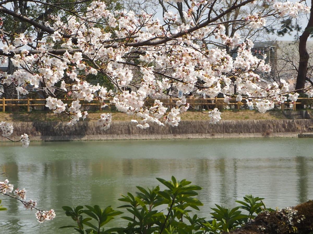 цвят, цъфтежа череша, градина, Япония, Пролет време, дърво, сезон, парк, река, декори