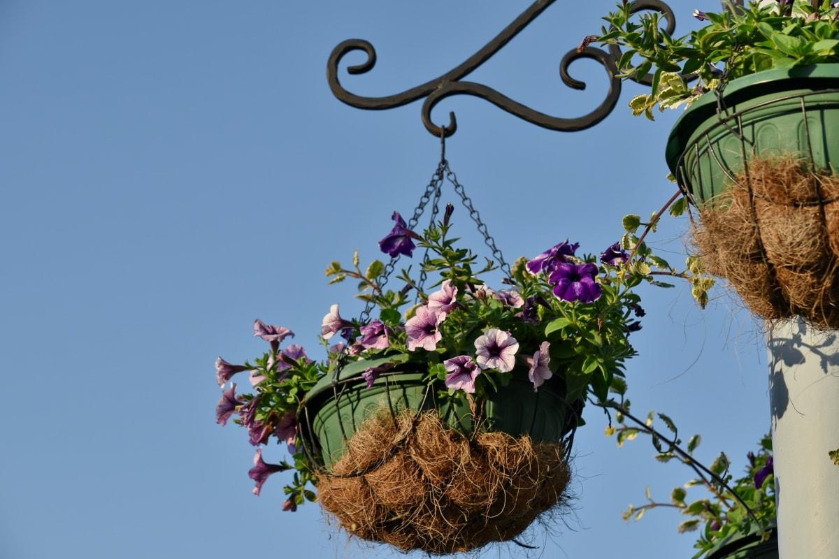 liatina, kvetináča, zátišie, ružová, kvet, príroda, krídlo, Záhrada, flóra, letné