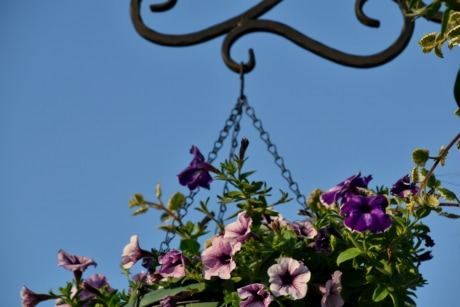 cast iron, nature, flower, leaf, flora, hanging, summer, garden, bright, color