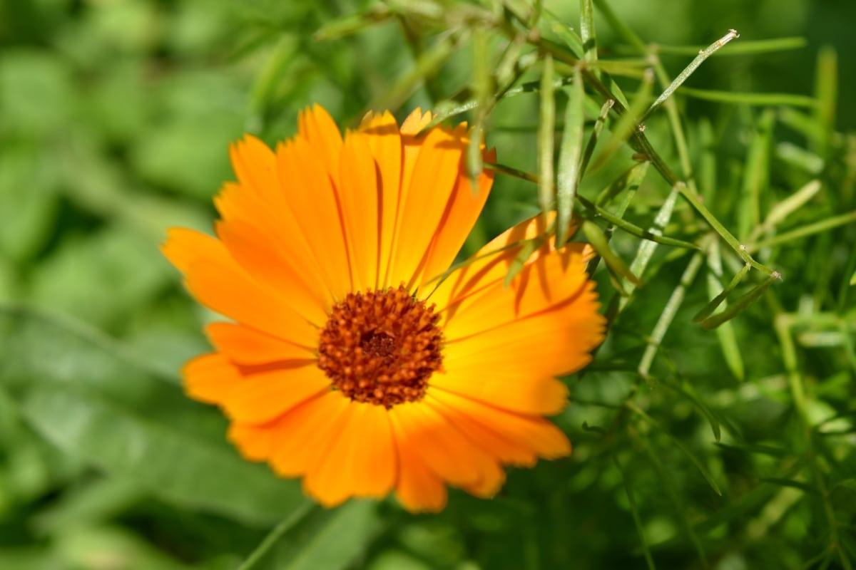 luminosa, Colore, giardino di fiore, prato, pianta, petalo, Margherita, Giardino, Flora, fiorire