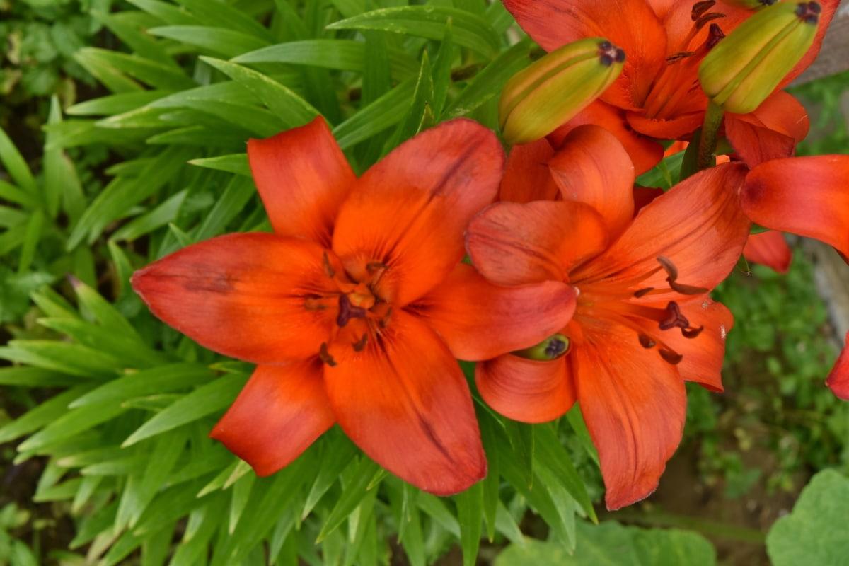 jardin fleuri, floraison, printemps, feuille, nature, fleur, fleur, plante, pétale, jardin